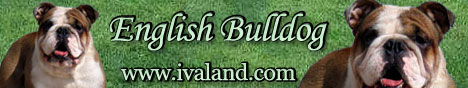 English Bulldog IvaLand.com