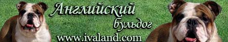 Английский бульдог и Бостон терьер IvaLand.com. Сайт посвящен породам английский бульдог и бостон терьер. Сайт содержит фото, объявление о продажа щенков, вязки, результаты выставок, консультации по породе и тд.